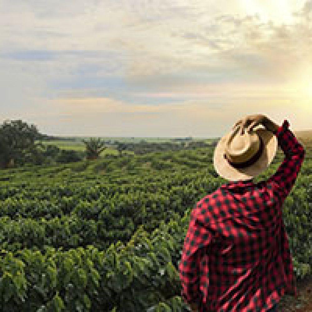SDC-TCS – Faire des affaires dans le secteur agroalimentaire au Mexique