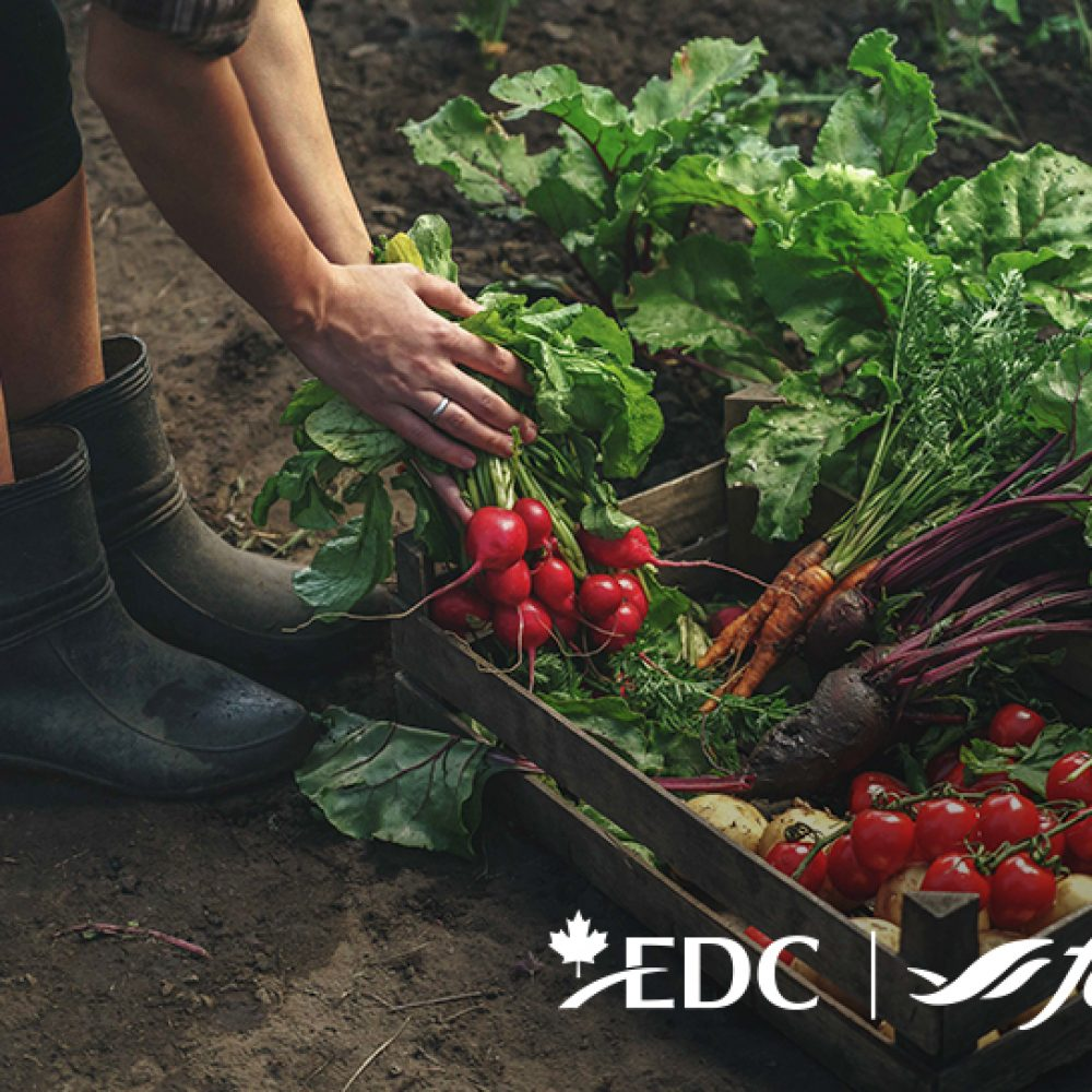 EDC- Webinar: Growing opportunities: Overcoming COVID-19's impact on agri-food/ September 10th, 2020