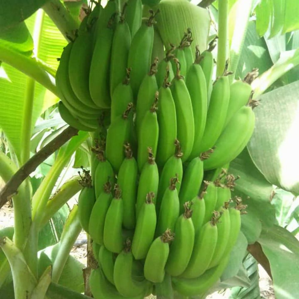 """BURKINA FASO / JEDD (ONG) EN ACTIVITES HEBDOMADAIRES: """"… Nous mettons à votre disposition des plantes de toutes sortes."""""""
